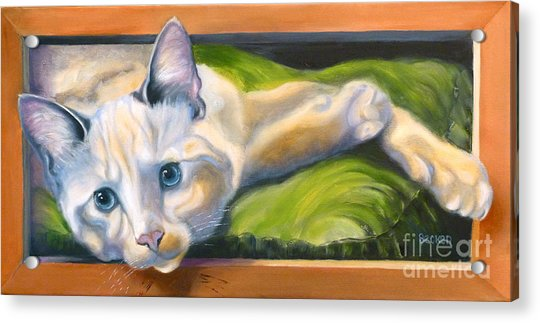 Picture Purrfect Acrylic Print