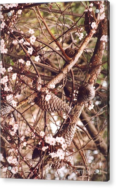 Acrylic Print featuring the photograph Pinecones And Cherry Blossoms by Cynthia Marcopulos