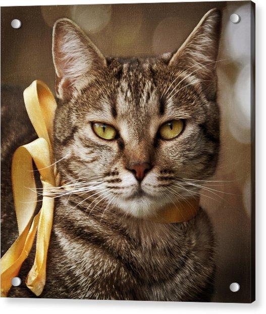 Portrait Of Tabby Cat With Yellow Ribbon Acrylic Print by by Sigi Kolbe