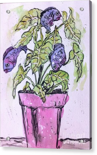 Potted Fish Acrylic Print by Norma Gafford