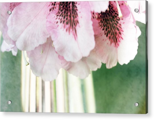 Rhododendron Refraction Acrylic Print by Margaret Hormann Bfa