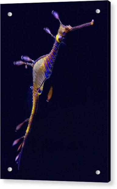 Seadragon  Acrylic Print by Donna Pagakis