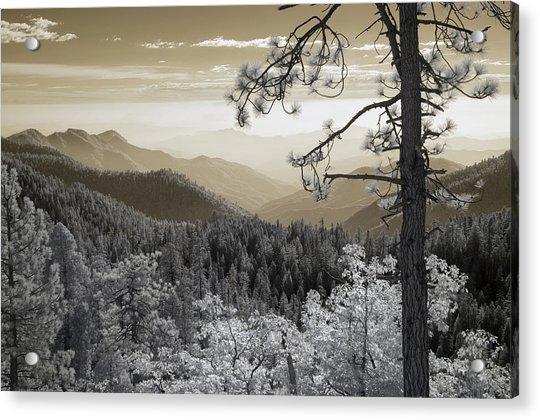 Sequoia View Acrylic Print