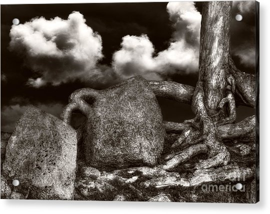 Stones And Roots Acrylic Print