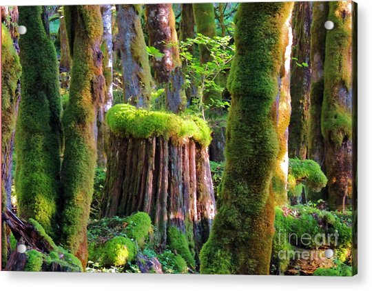 Stump And Moss  Acrylic Print