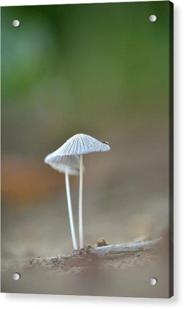 The Mushrooms Acrylic Print