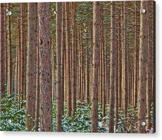 The Trees Acrylic Print by David Wynia