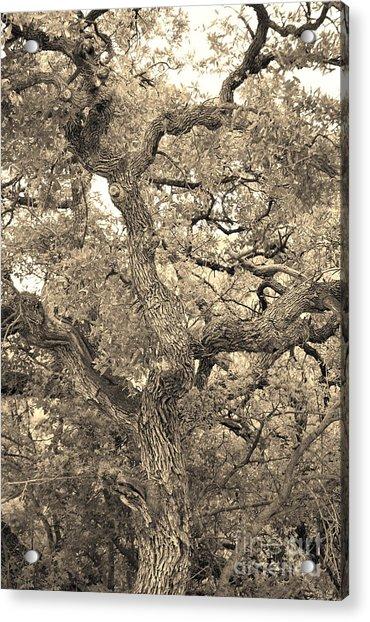 The Wicked Tree Acrylic Print