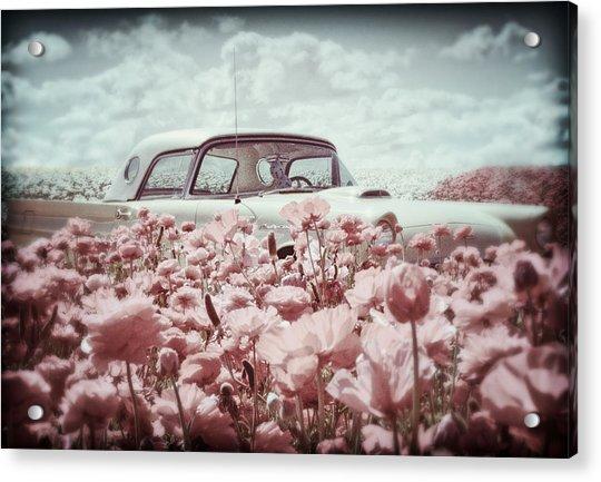 Thunderbird Classic Acrylic Print by Donna Pagakis