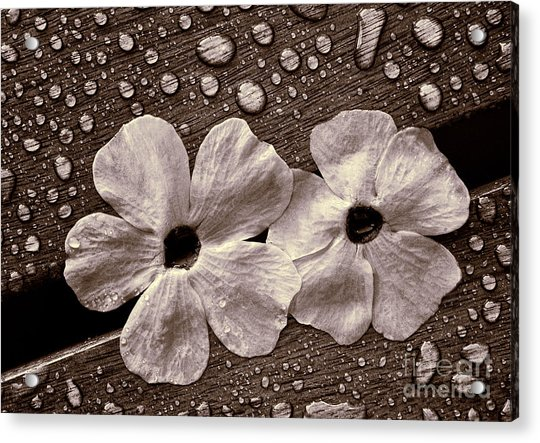 Wet Flowers And Wet Table Acrylic Print