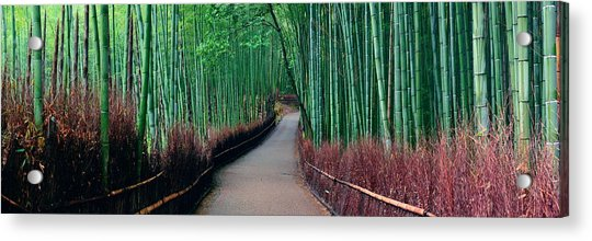 Bamboo Grove Acrylic Print