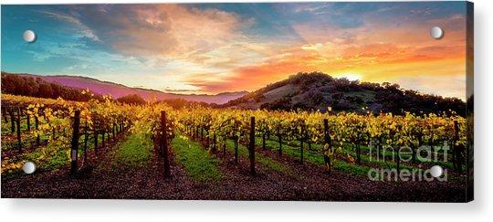 Morning Sun Over The Vineyard Acrylic Print