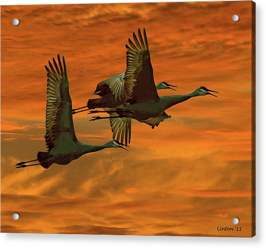 Cranes At Sunrise Acrylic Print