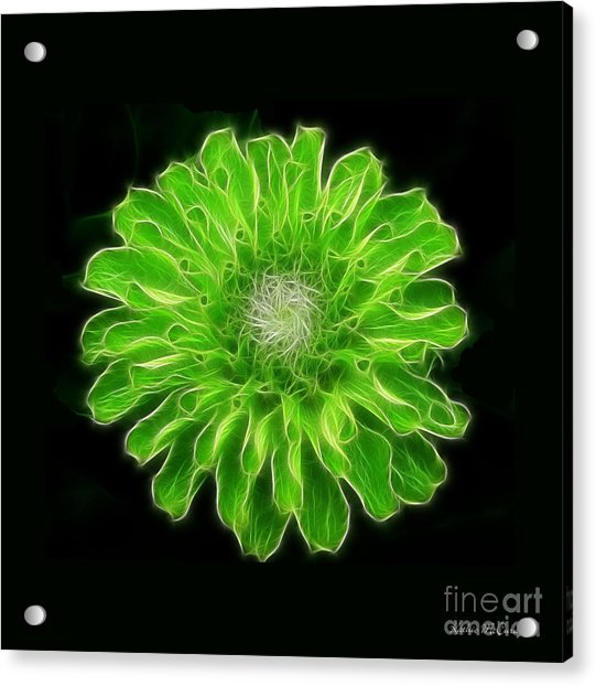 Green Envy Zinnia Photograph By Kathie Mccurdy