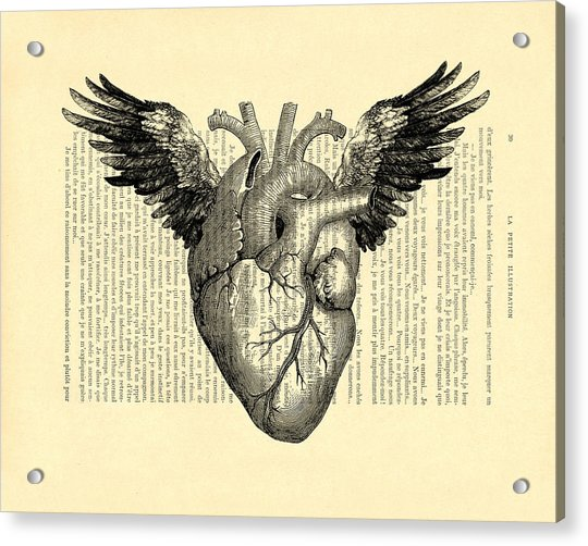 Heart With Wings Acrylic Print