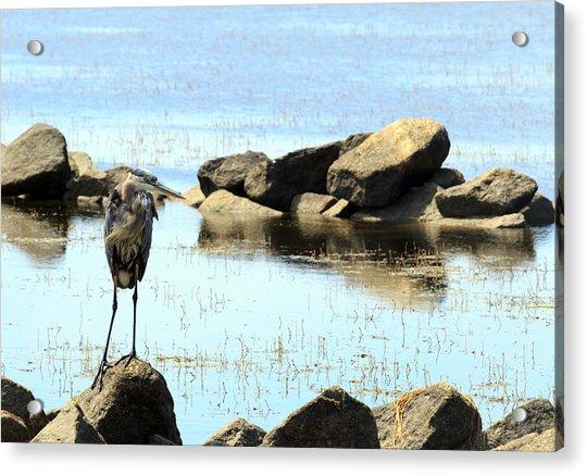Heron On The Rocks Acrylic Print