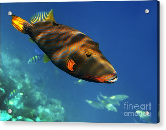 Acrylic Print featuring the photograph Maldives by Juergen Held