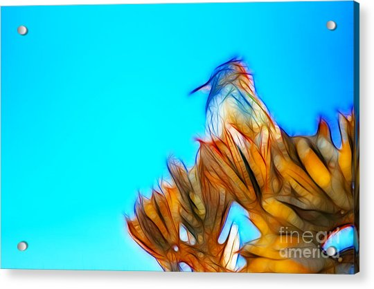 The Cactus Wren Acrylic Print