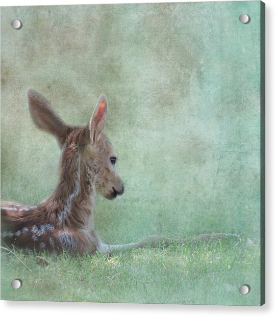 Acrylic Print featuring the photograph Tranquil by Sally Banfill