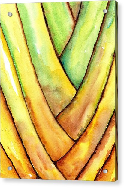 Travelers Palm Trunk Acrylic Print
