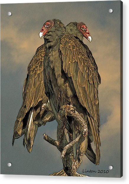 Turkey Vulture Pair Acrylic Print
