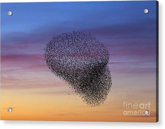 150501p260 Acrylic Print