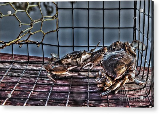 2 Crabs In Trap Acrylic Print