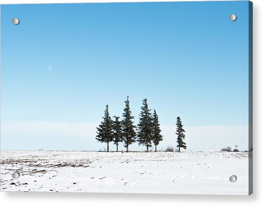 6 Pines And The Moon Acrylic Print