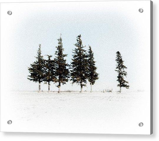 6 Trees Acrylic Print
