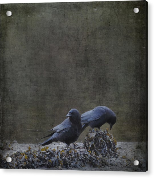 Acrylic Print featuring the photograph Blackbirds At The Beach by Sally Banfill