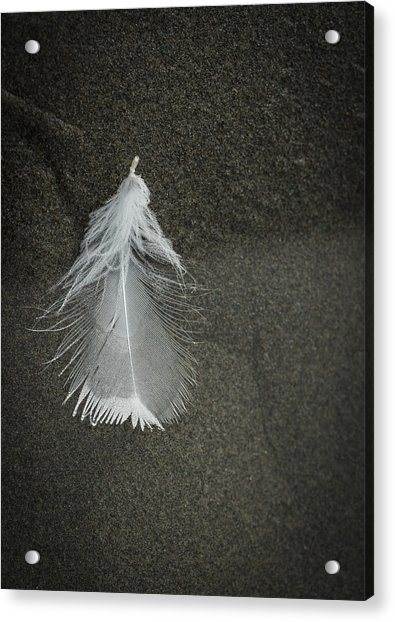 A Feather At The Edge Of The Water Acrylic Print