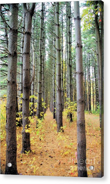 A Pines Army Acrylic Print