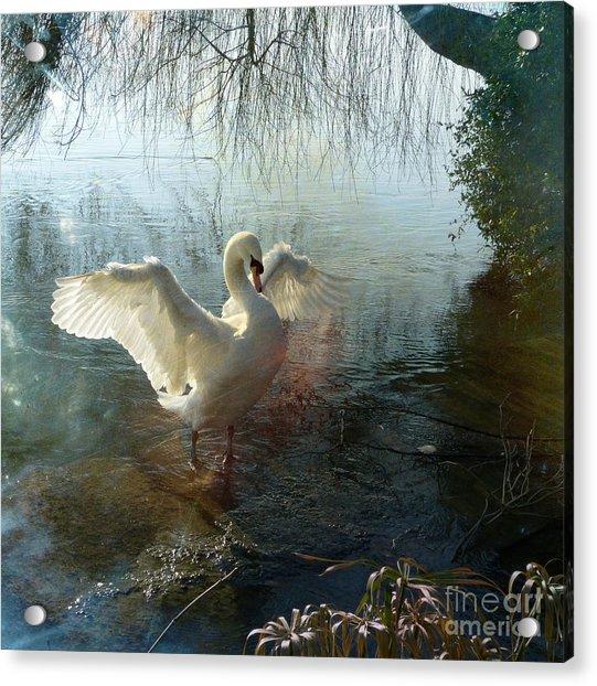 A Very Fine Swan Indeed Acrylic Print