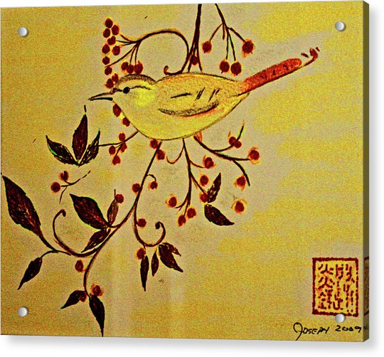 A Wren - In Pastel  Acrylic Print