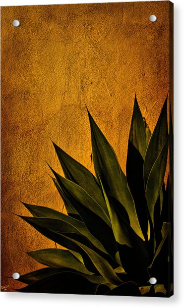 Acrylic Print featuring the photograph Adobe And Agave At Sundown by Chris Lord