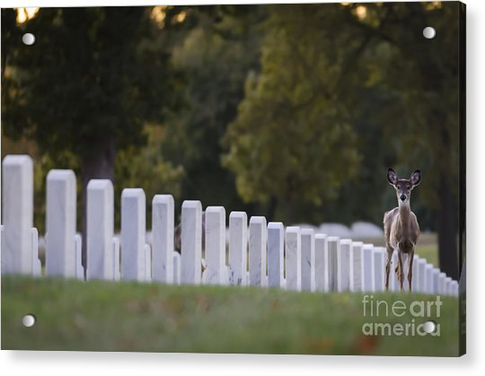 After Visiting Hours Acrylic Print