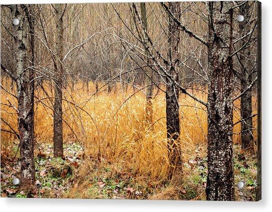 Alder Grove Acrylic Print