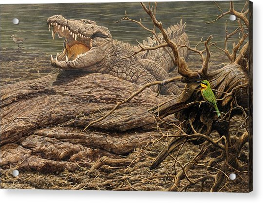 Acrylic Print featuring the painting Alligator by Alan M Hunt