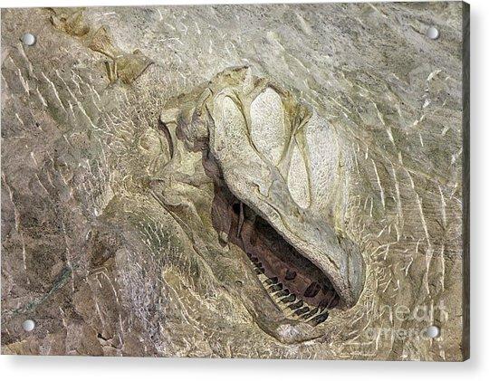 Camarasaurus Acrylic Print