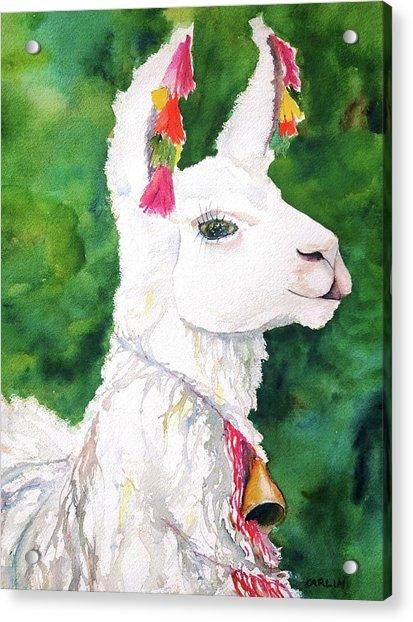 Alpaca With Attitude Acrylic Print