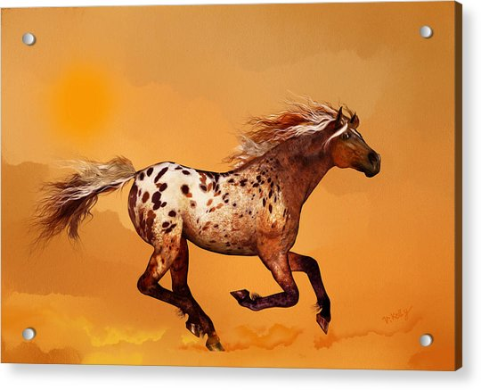 Acrylic Print featuring the painting An Appaloosa Called Ginger by Valerie Anne Kelly