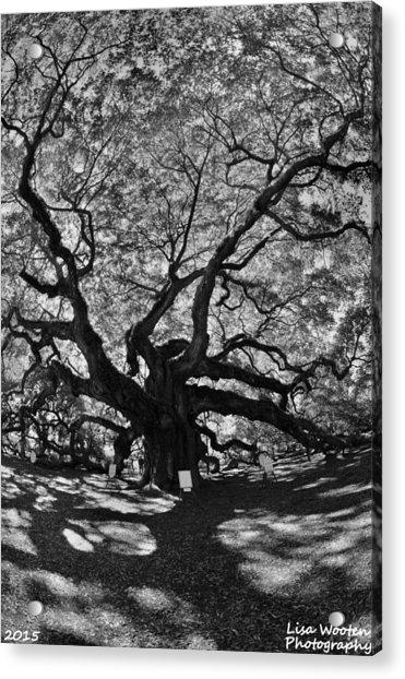 Angel Oak Johns Island Black And White Acrylic Print