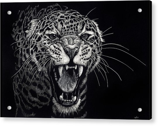Angry Leopard Acrylic Print
