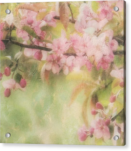 Apple Blossom Frost Acrylic Print