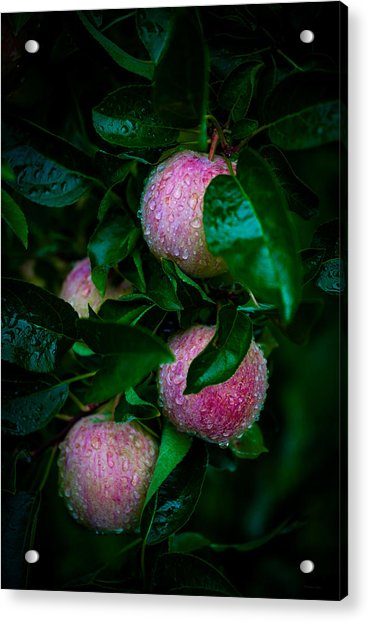 Apples After The Rain Acrylic Print