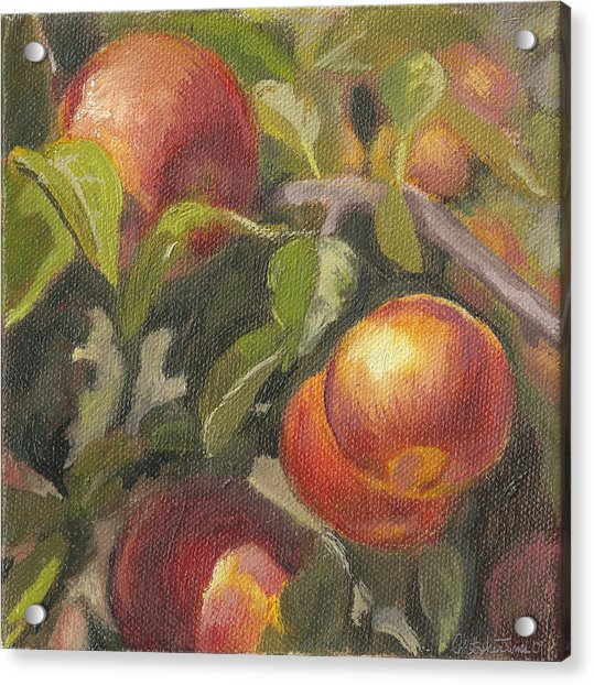 Apples In The Orchard Acrylic Print by Christopher James