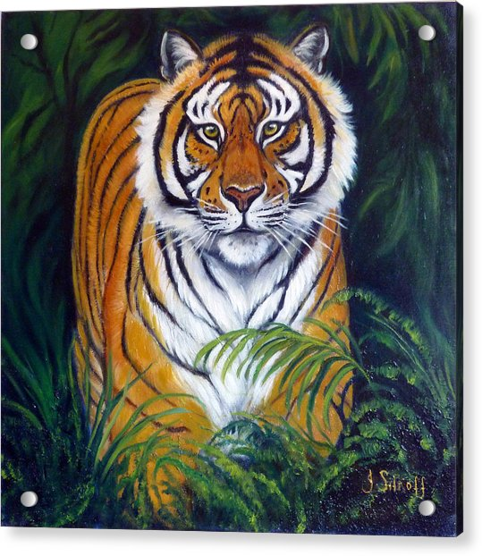 Approaching Tiger Acrylic Print by Janet Silkoff