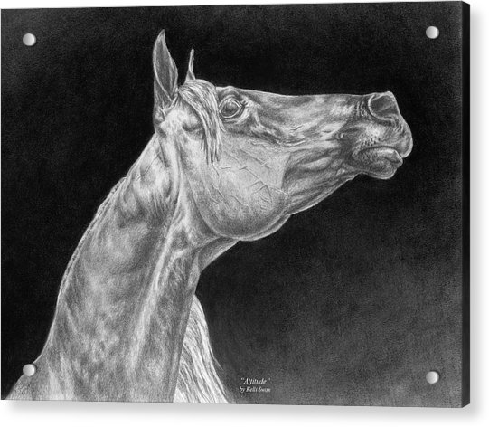 Arabian Horse Attitude Print Acrylic Print