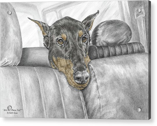 Are We There Yet - Doberman Pinscher Dog Print Color Tinted Acrylic Print