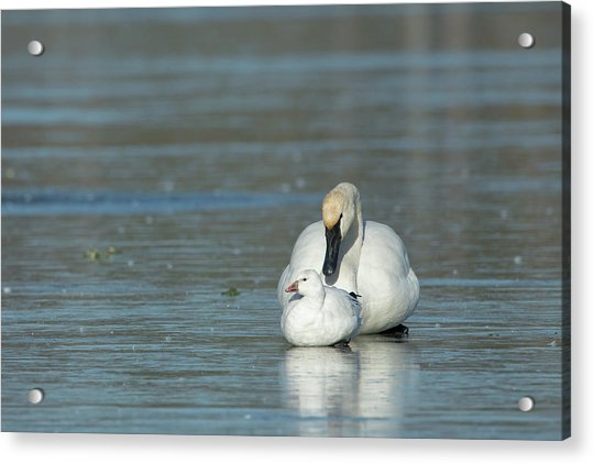 Are You My Mommy? Acrylic Print